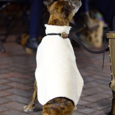 A dog participates in the event at the Iowa River Landing for the second time, displaying a white cape designed by a local designer.